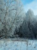 Bosque del invierno cubierto con helada en el fondo Imagen de archivo