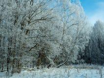 Bosque del invierno cubierto con helada en el fondo Imágenes de archivo libres de regalías