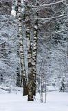 Bosque del invierno cubierto con nieve fotos de archivo
