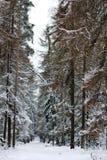 Bosque del invierno cubierto con nieve Fotos de archivo libres de regalías