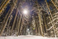 Bosque del invierno cubierto con nieve Fotografía de archivo