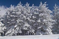 Bosque del invierno cubierto por Snow Fotos de archivo libres de regalías