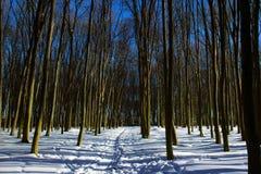 Bosque del invierno de árboles desnudos con el musgo Foto de archivo libre de regalías