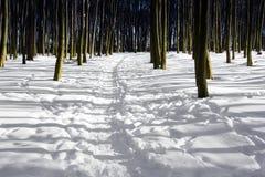 Bosque del invierno de árboles desnudos con el musgo y el cielo azul Foto de archivo libre de regalías