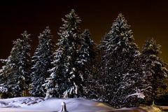 Bosque del invierno de la noche Fotografía de archivo