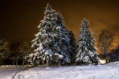Bosque del invierno de la noche Imagen de archivo libre de regalías