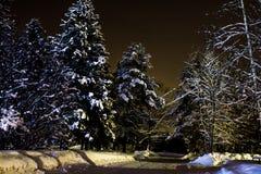 Bosque del invierno de la noche Fotos de archivo libres de regalías
