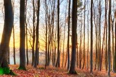 Bosque del invierno de la puesta del sol Imagenes de archivo