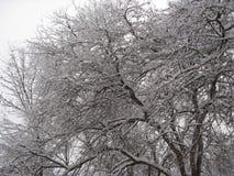 Bosque del invierno debajo de la nieve Fotografía de archivo libre de regalías