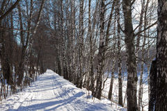 Bosque del invierno debajo de la nieve Fotografía de archivo