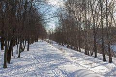 Bosque del invierno debajo de la nieve Foto de archivo libre de regalías