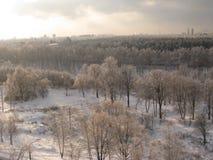 Bosque del invierno debajo de la nieve Imagen de archivo