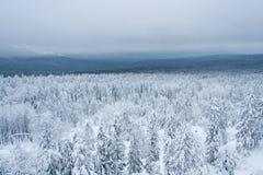 Bosque del invierno del cuento de hadas Imagenes de archivo