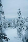Bosque del invierno del cuento de hadas Imagen de archivo libre de regalías