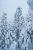 Bosque del invierno del cuento de hadas Fotografía de archivo libre de regalías