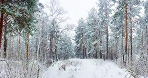 Bosque del invierno durante nevadas Fotografía de archivo libre de regalías