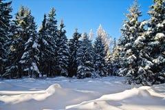 Bosque del invierno en Austria septentrional Foto de archivo libre de regalías