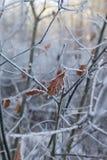 Bosque del invierno en Bielorrusia, Europa Oriental Fotografía de archivo libre de regalías