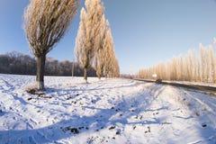 Bosque del invierno en el pescado-ojo Foto de archivo libre de regalías
