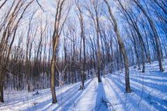 Bosque del invierno en el pescado-ojo Imagen de archivo