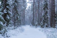 Bosque del invierno en Finlandia, Europa Imagen de archivo