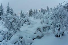 Bosque del invierno en Finlandia septentrional Fotos de archivo libres de regalías