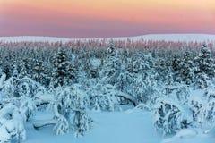 Bosque del invierno en Finlandia septentrional Imagen de archivo libre de regalías
