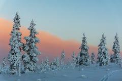 Bosque del invierno en Finlandia septentrional Imágenes de archivo libres de regalías