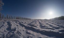 Bosque del invierno en fisheye del día soleado Imagen de archivo libre de regalías
