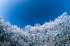 Bosque del invierno en fisheye del día soleado Fotos de archivo
