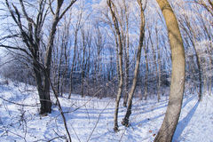 Bosque del invierno en fisheye del día soleado Imagenes de archivo