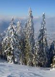 Bosque del invierno en la montaña Imagenes de archivo