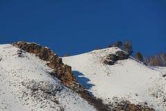 Bosque del invierno en la nieve foto de archivo