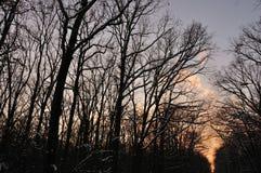 Bosque del invierno en la puesta del sol Fotos de archivo libres de regalías