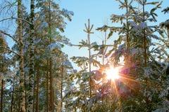 Bosque del invierno en la puesta del sol Foto de archivo libre de regalías