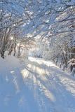 Bosque del invierno en la salida del sol Fotografía de archivo