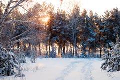 Bosque del invierno en la salida del sol Foto de archivo