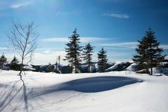 Bosque del invierno en las montañas Foto de archivo