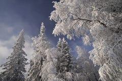 Bosque del invierno en las montañas de Ural Imagen de archivo