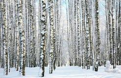 Bosque del invierno en luz del sol Imagen de archivo