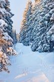 Bosque del invierno en montañas Fotografía de archivo