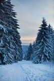 Bosque del invierno en montañas Foto de archivo