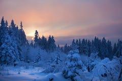 Bosque del invierno en montañas Foto de archivo libre de regalías