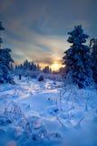 Bosque del invierno en montañas Fotografía de archivo libre de regalías