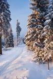 Bosque del invierno en montañas Imagenes de archivo