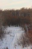 Bosque del invierno en nieve Foto de archivo