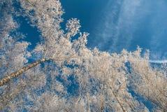 Bosque del invierno en Rusia Imagen de archivo