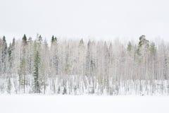 Bosque del invierno en Rusia foto de archivo libre de regalías