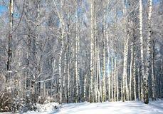 Bosque del invierno en tiempo soleado Foto de archivo