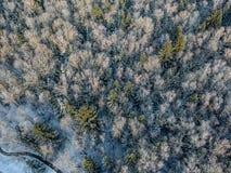 Bosque del invierno en una mañana soleada fría fotografía de archivo libre de regalías